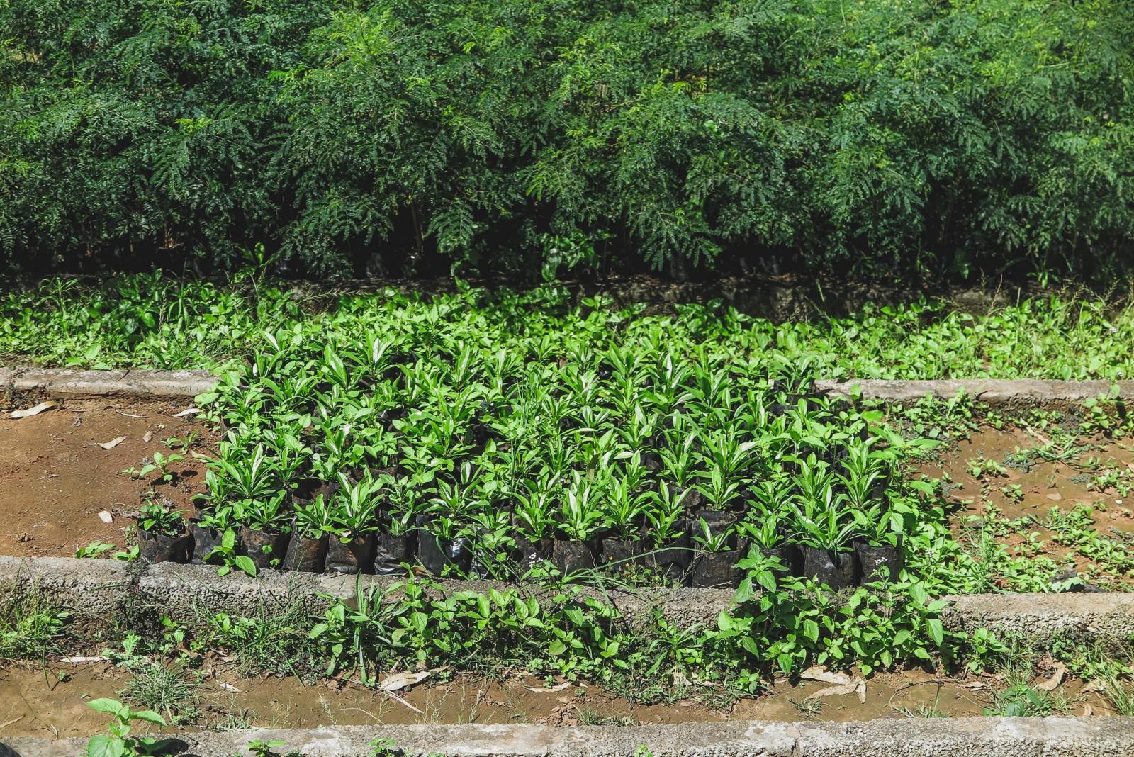 Cabo verde - Conservación