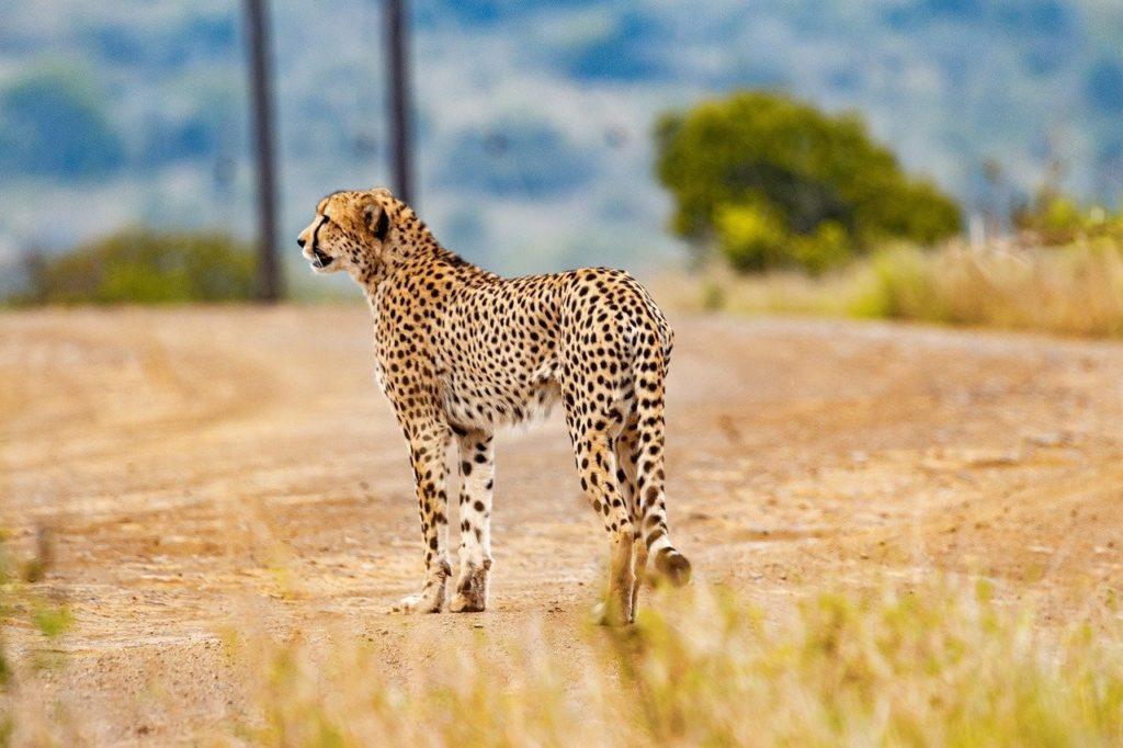 voluntariado sudafrica animales