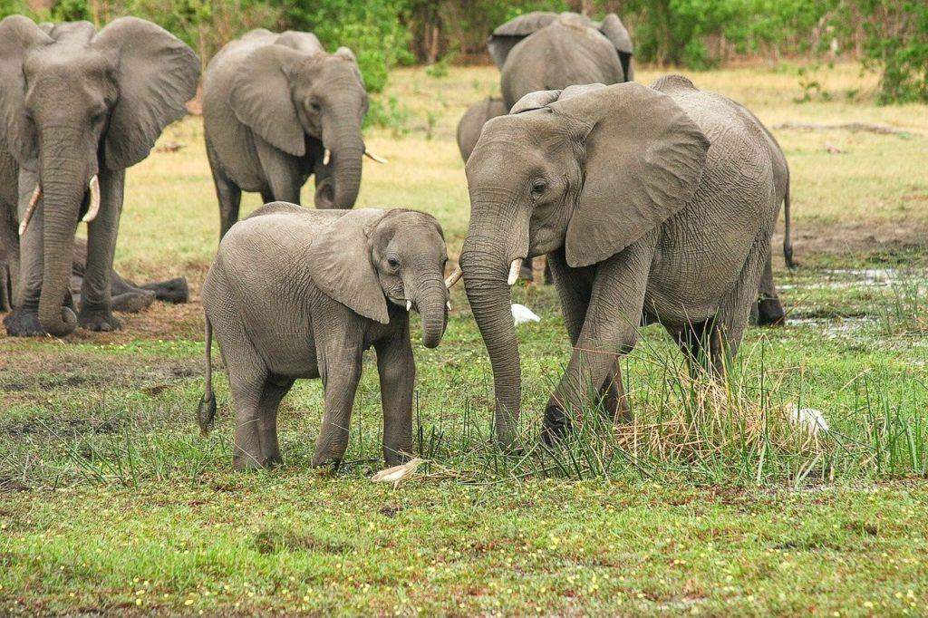 voluntariado sri lanka con elefantes