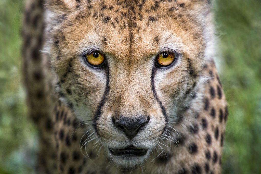 reserva natural sudafrica